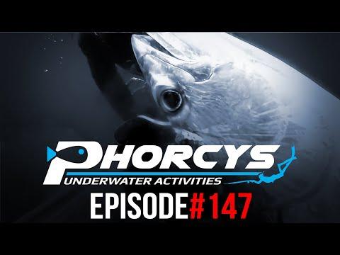 PHORCYS Spearfishing Worldwide Videos #147 - Underwater Activities 2019