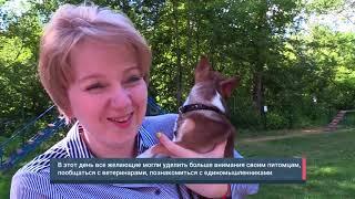 ФАН ТВ. Новости. В Сокольниках прошел День собак