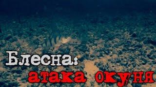 Блесна: атака окуня - подводное видео.