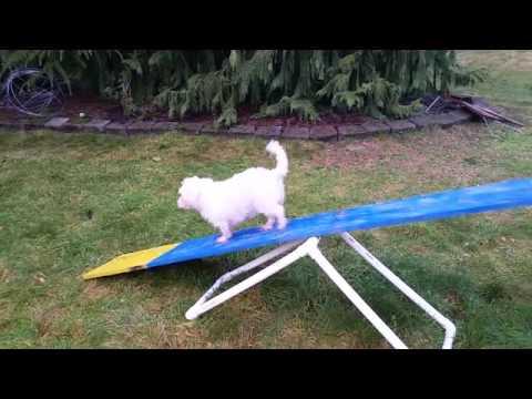 Amazing Dog Tricks by Cookie