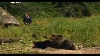 Медведи гризли в западной Канаде