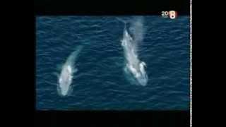 Гиганты мира океанов