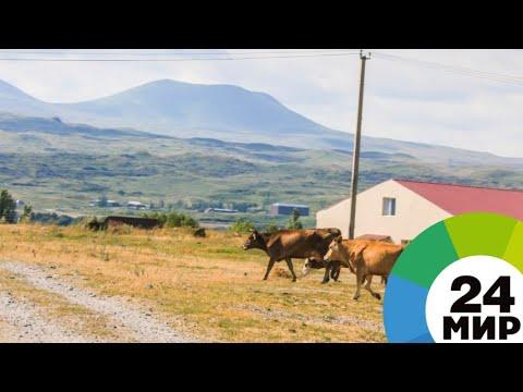 Бизнес-леди Армении получают гранты на развитие села - МИР 24