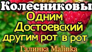 Колесниковы /Обзор новых ВЛОГОВ /Одним Достоевский, другим рот в рот //