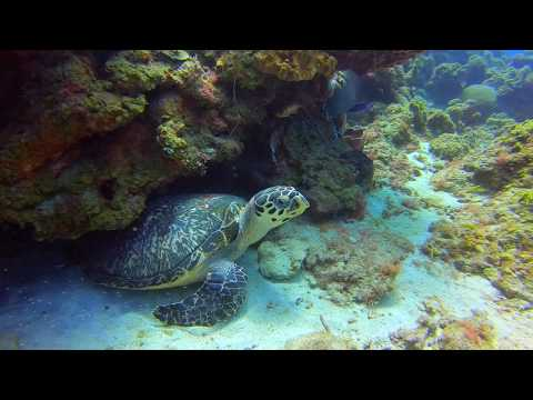 Diving with Scuba St Lucia