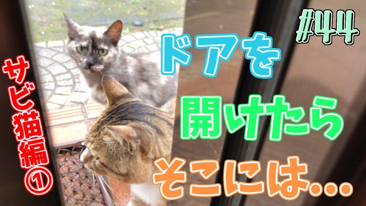 野良猫ニーコが家猫になるまで #44