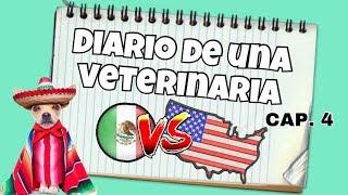 ¿MÉXICO O USA? | SEMANA 4 | DIARIO DE UNA VETERINARIA