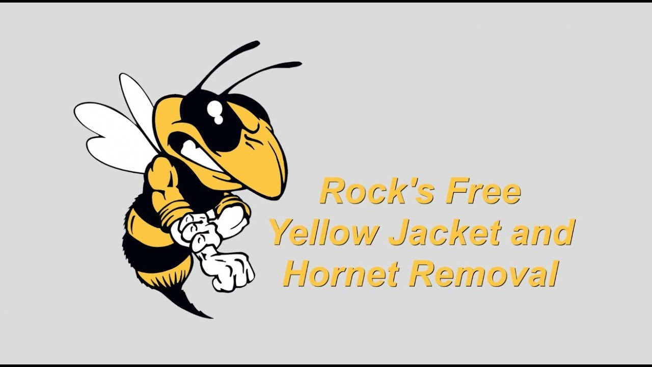 Ground Bee Or Yellow Jacket Removal Youtube
