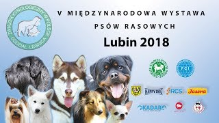 V MIĘDZYNARODOWA WYSTAWA PSÓW RASOWYCH LUBIN 2018  - sobota