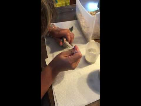 Feeding 3 week old Baby Quaker Parrot Bird
