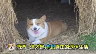 201703 COLT PLUS 網紅大好評_【連環泡有芒果】《三寶運動健身計劃》 thumbnail