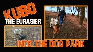 Kubo Goes to the DOG PARK! - The  Adolescent Eurasier with Lunging Problems - Part 2