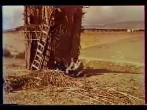reportage rare sur arzew dans les année 60 (arzew et  ça industrie)