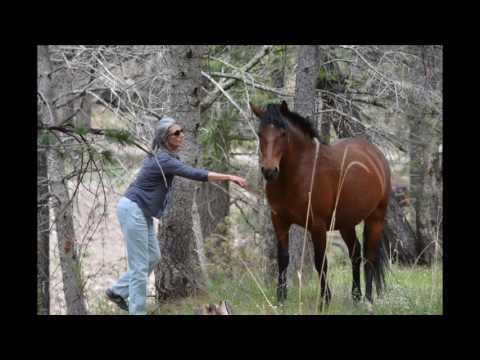 Wild Horses of Ruidoso new Mexico