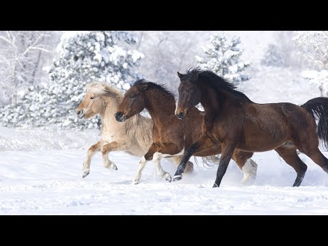 Atlar Hakkında İlginç Bilgiler