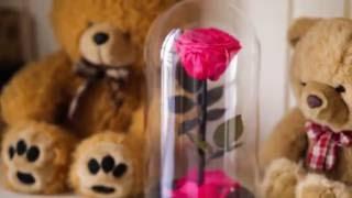 видео роза в колбе красавица и чудовище