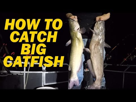 Fishing tips and techniques - Catfishing tips - how to catch catfish from YouTube · High Definition · Duration:  15 minutes 48 seconds  · 33,000+ views · uploaded on 3/1/2017 · uploaded by Catfish and Carp