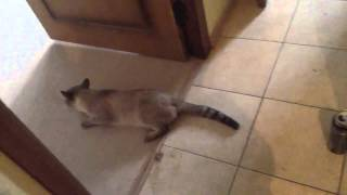 Кот отходит от наркоза ахахаха