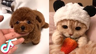 The Cutest Pets I found on TikTok 🥰