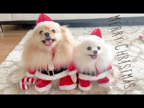 Puppy Santa is Coming to town