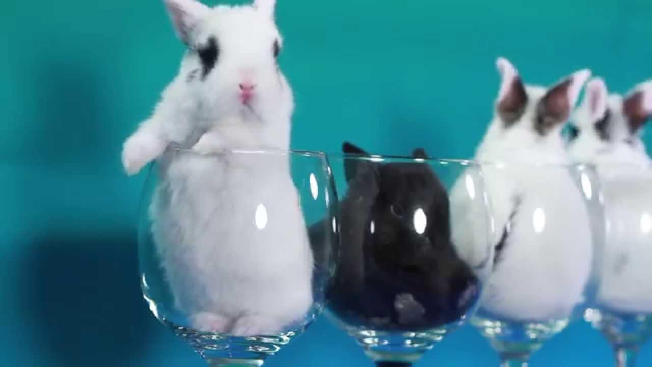 Easter Drinking Glasses