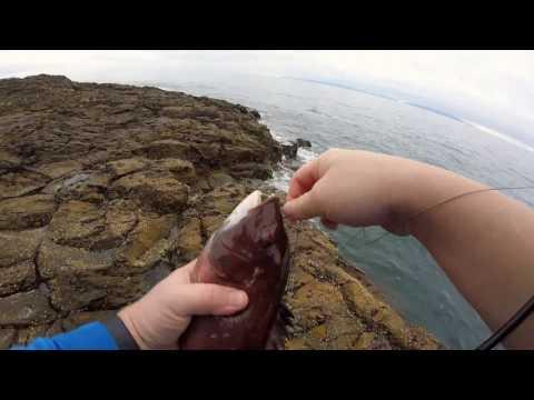 Palos Verdes Fishing For SheepHead