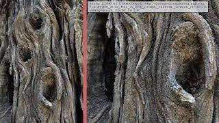 20) Beginners Guide to Bonsai Deadwood - Bonsai Technique Series