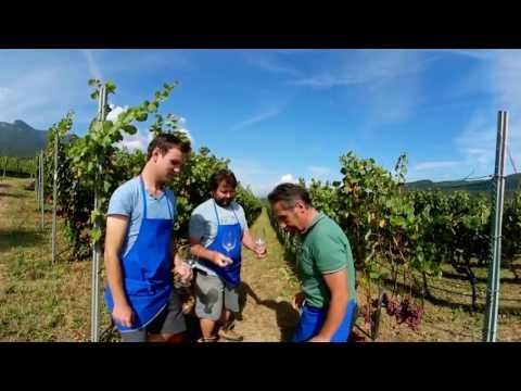 Südtirol Wein 360°