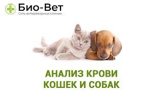 Анализ крови кошек и собак.  Ветеринарная клиника Био-Вет.
