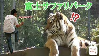 静岡県のサファリパークに行ってきました!バスで場内を回らしてもらっ...