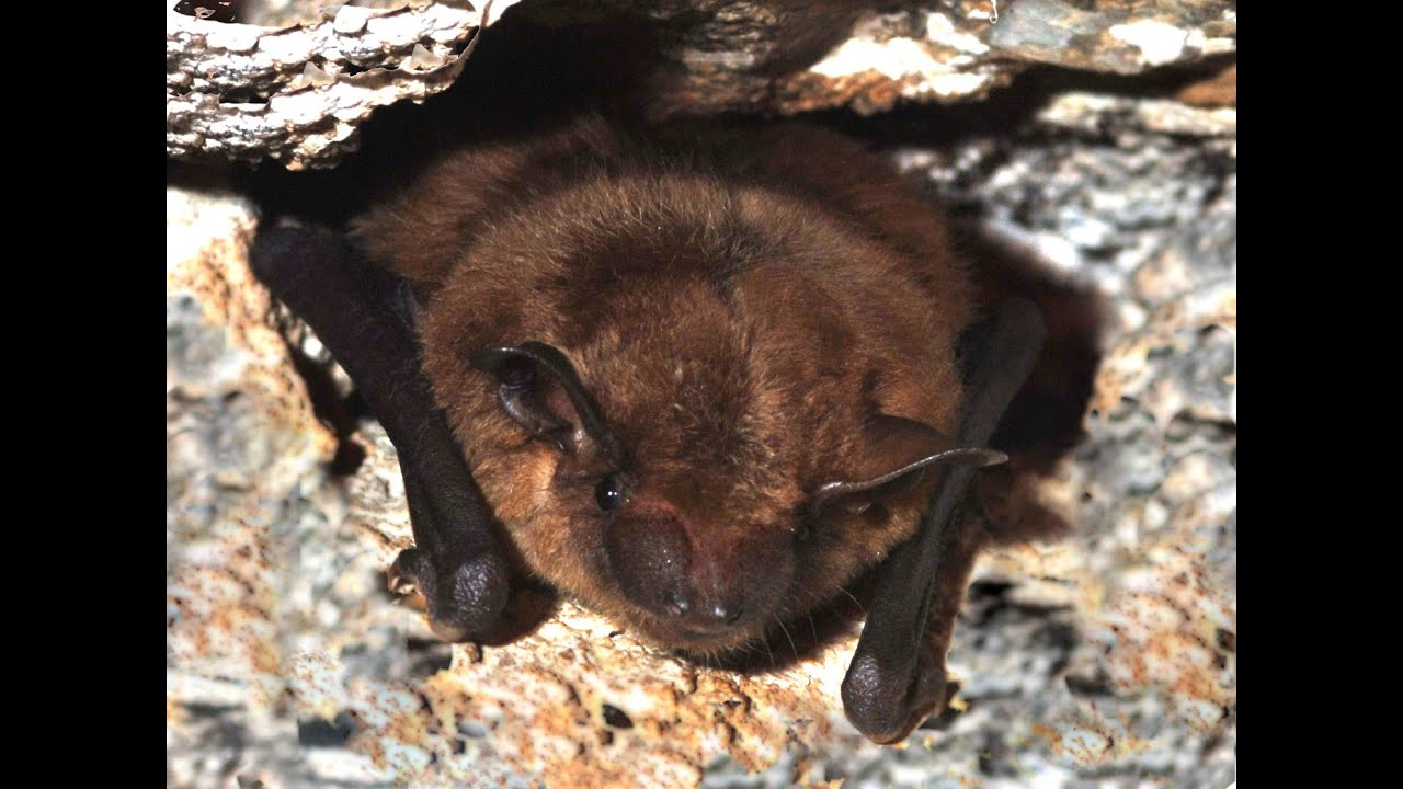 How To Control Bats In And Around The House