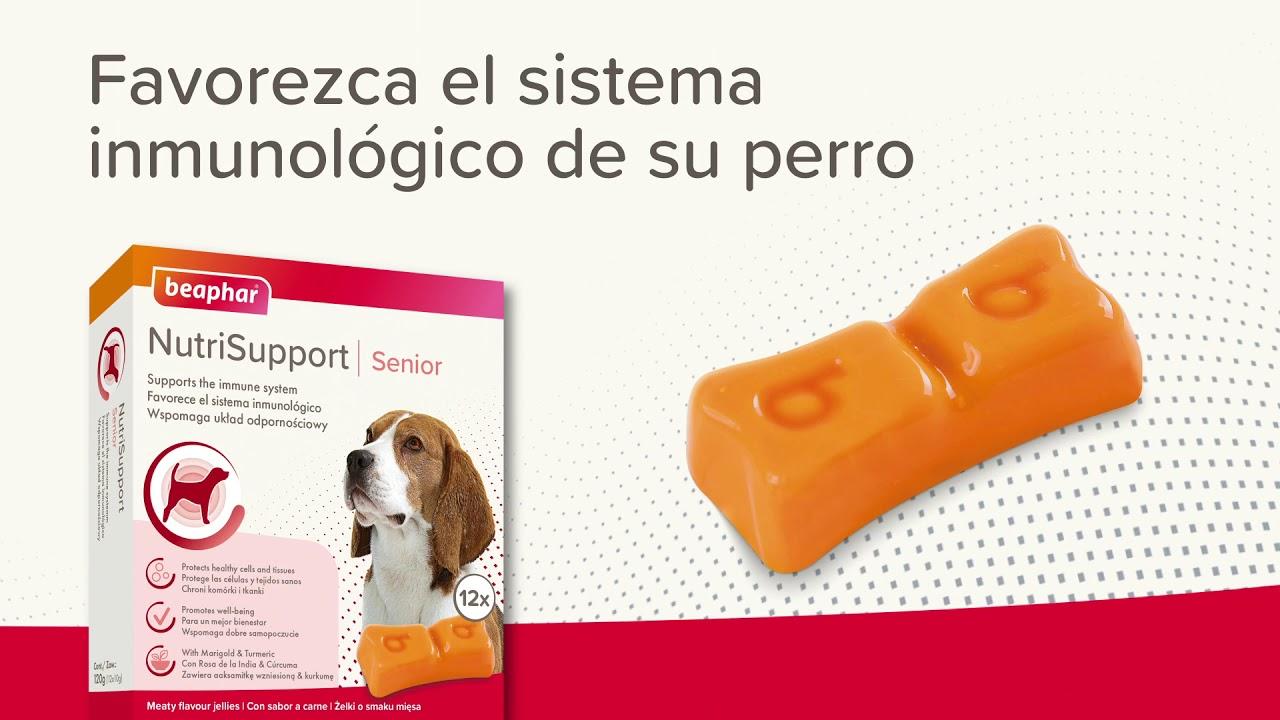 Suplemento alimenticio para perros senior Beaphar Nutrisupport