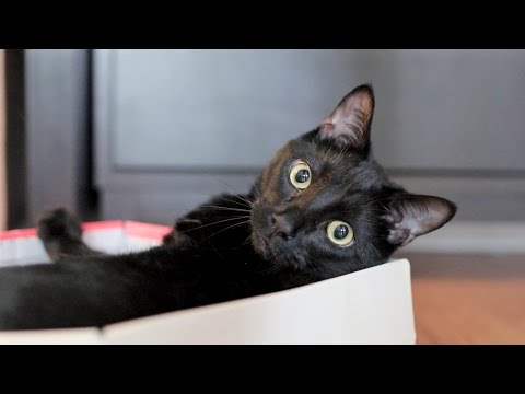 N2 the Talking Cat S4 Ep7 - Cat in a Box