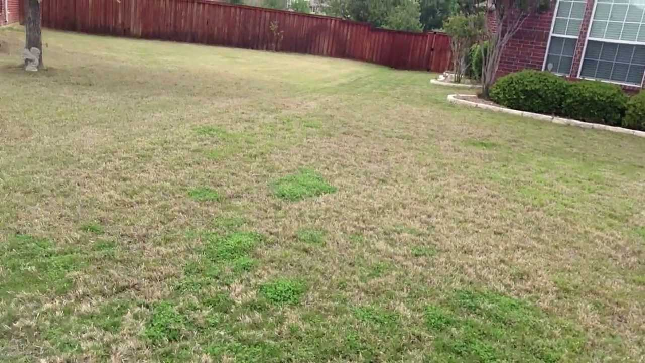 Bermuda Comparison To Cavalier Zoysia For Shade Lawns Or Sun You