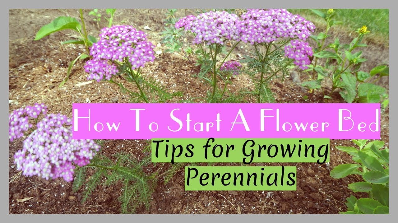 Plant With Me | 9 Tips For Starting A Flower Garden