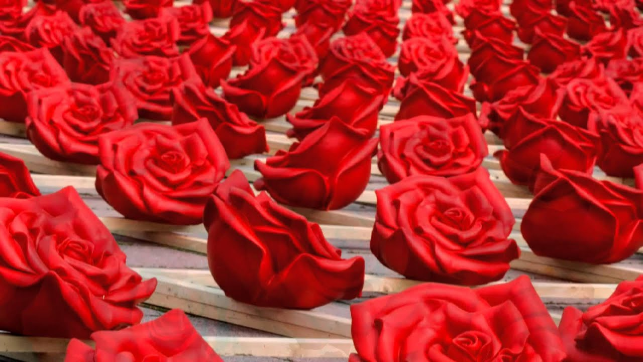 картинки миллион алых роз
