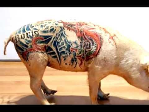 Свиньи с татуировками фото