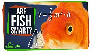 Fish Are Way Smarter Than You Think