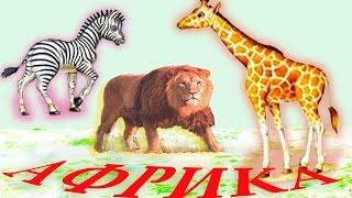 Животные Африки и их звуки дикие животные для детей развивающее видео