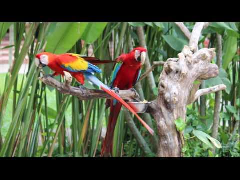 Andys Bali Birds