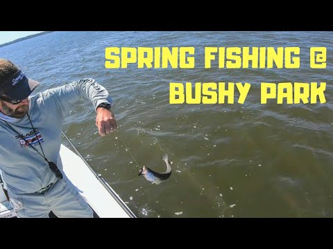 Fishing Bushy Park - April 27, 2019
