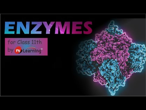 ENZYMES:  HISTORY OF ENZYMES - 01 For Class 11th and AIPMT