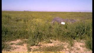 4 Acre Residential Land for Sale Near Lancaster California Los Angeles County FSBO