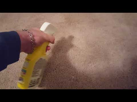 Clorox pet urine remover! IT REALLY WORKS!