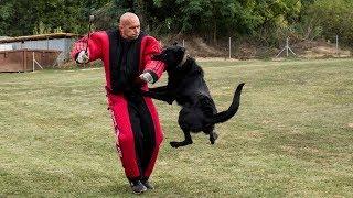 Pozrite si tréning policajných psov