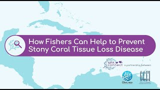 How Fishers Can Help to Prevent Stony Coral Tissue Loss Disease