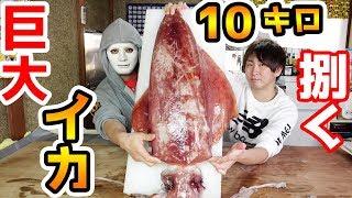 気まぐれクックと10キロの巨大なイカを捌いてイグ!【Raphael】 thumbnail