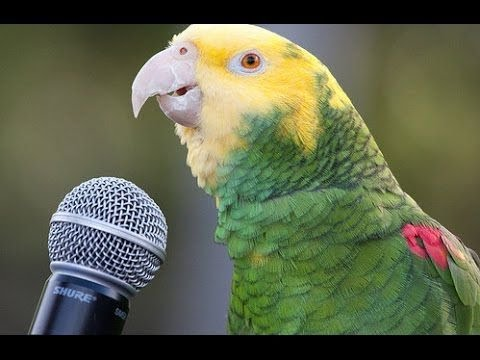 Funny Parrot  – A Cute Funny Parrots Talking Videos Compilation ||NEW HD