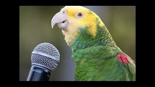Funny Parrot  - A Cute Funny Parrots Talking Videos Compilat...