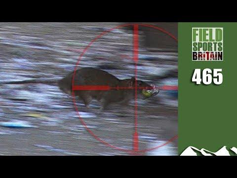 Fieldsports Britain - Hectic Daytime Rat Hunt